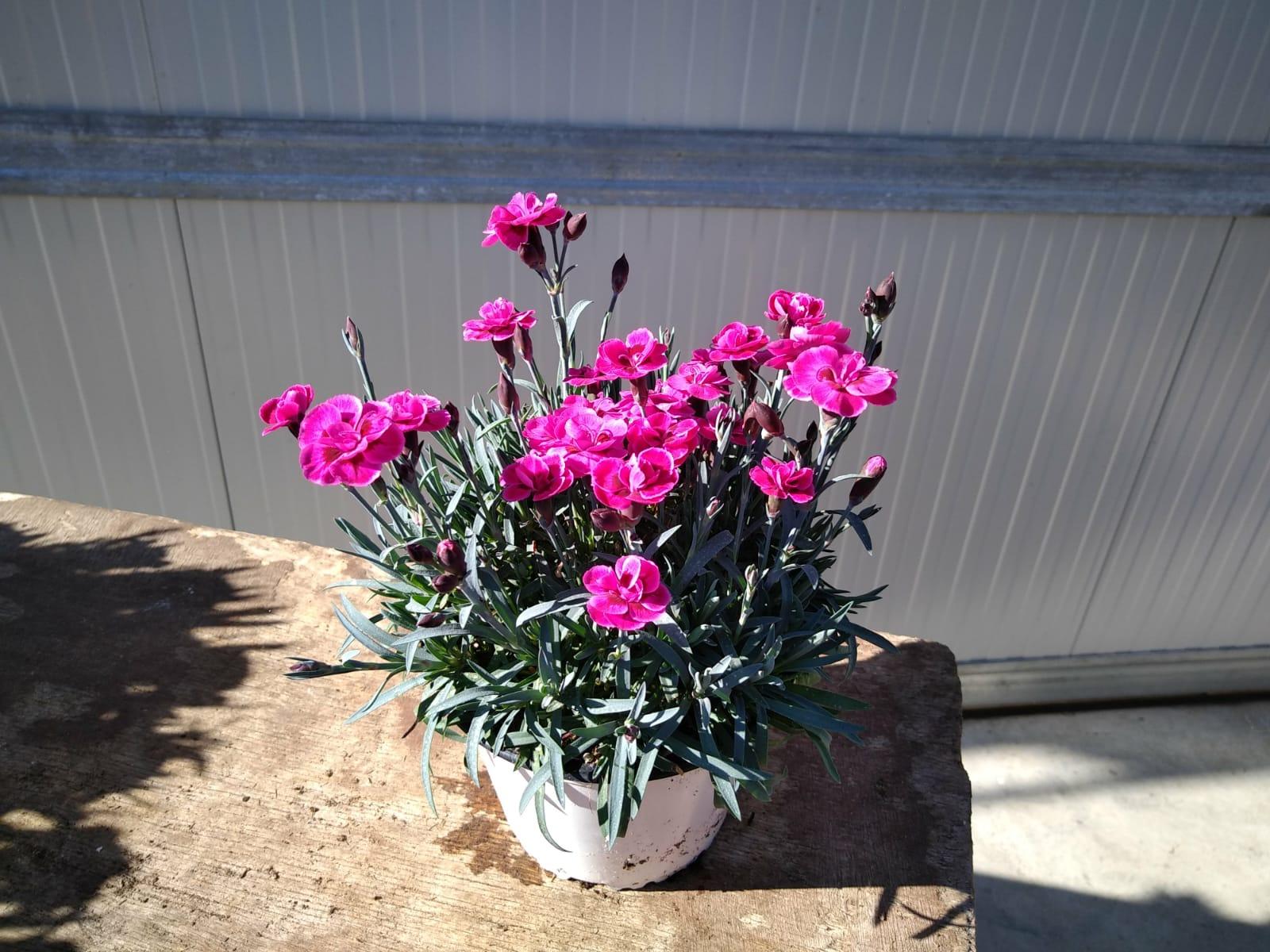 Garofano purple wedding vaso 14